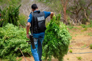 Is Marijuana Still a Felony in Arizona? - he Law Office of Zayed Al-Sayyed